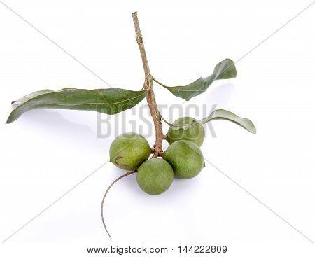 fresh macadamia nut on white background nut