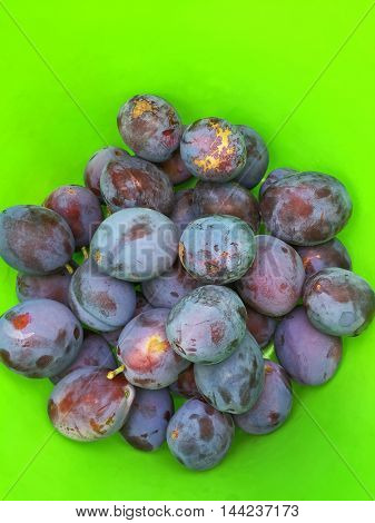 Freshly picked home grown organic plums inside green plastic bucket during Autumn in Austria