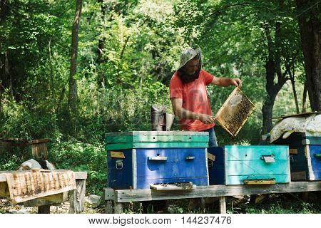 SOCHI, RUSSIA - JULE 29, 2016: Process of honey extracting from honeycomb in countryside apiary