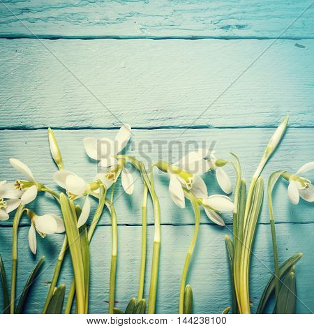 Easter concept with snowdrops on wooden background