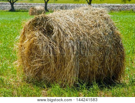 Close up sheaf of straw on a dry stone wall in the countryside of Puglia