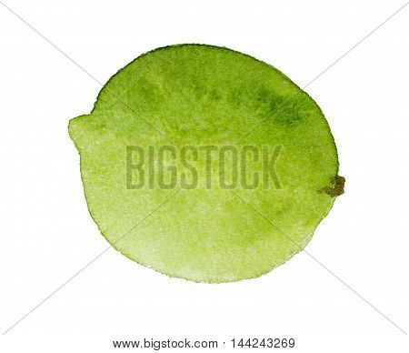 Watercolor Lime Isolated On White Background