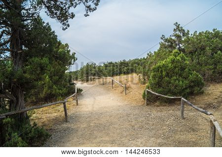 Evergreen trees in the relict juniper grove