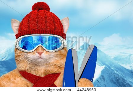 Cat wearing ski goggles relaxing in the mountain.