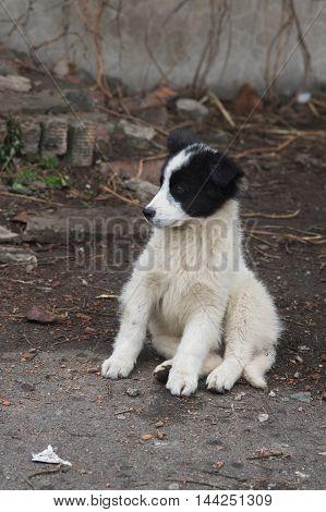 Teddy bear like stray puppy sitting on a dirty street