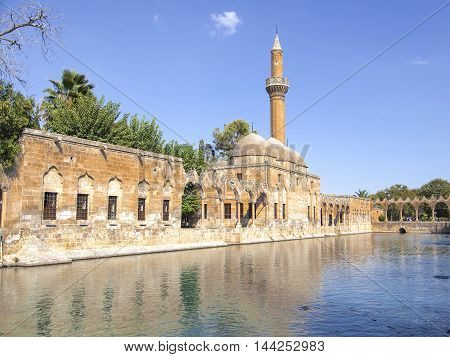 Fish lake views from a mosque in Turkey's Urfa.