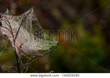 Web, Cobweb, Spiderweb, Net, Tissue, Spider's Web