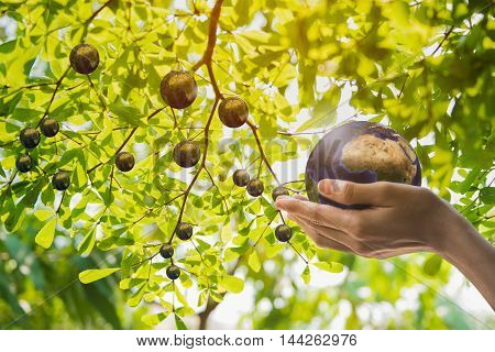 Holding earth planet in the hand. The imagination of creation earth planet concept and Corporate Social Responsibility or CSR concept. Elements of this image furnished by NASA. Clipping path included.