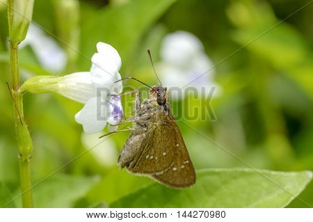 Butterflies fly from flower to another flower to find nectar.