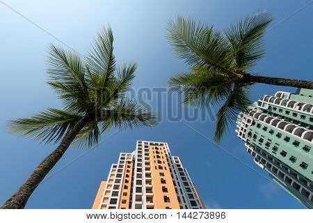 Tall Condominium Buildings and Palm Trees in Blue Sky