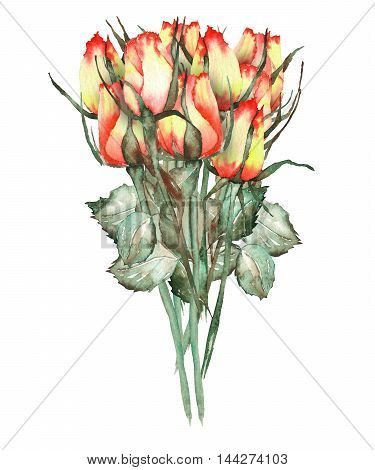 An illustration with an isolated bouquet of the nine beautiful watercolor red and yellow roses painted on a white background