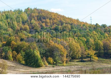 Autumn, Yellow Leaves Trees In The Hills Foothills
