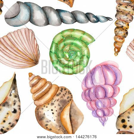 A seamless pattern with the isolated shells, painted in a watercolor on a white background