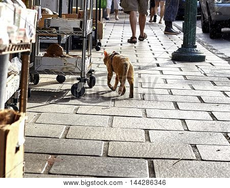 A cat walks past vendor carts and produce on a city sidewalk at sunrise