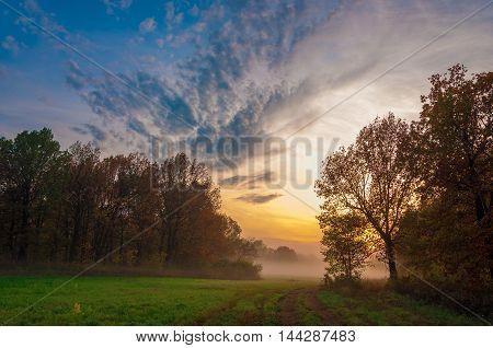 Fog, Mist, Haze, Smoke, Brume, Toman. Fog In Autumn Oak Forest