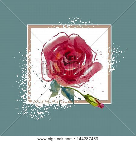 Flowers, red rose with leaves watercolor illustration