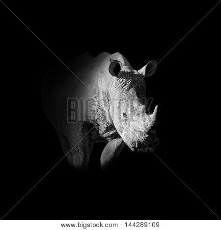 A dark monochrome portrait of a White Rhinoceros