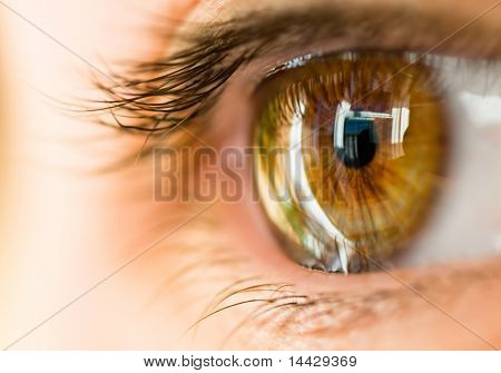 the macro image of the brown eye