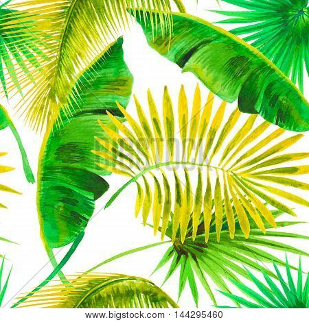 Palm banana leaves on the white background. Watercolor with tropical plants.