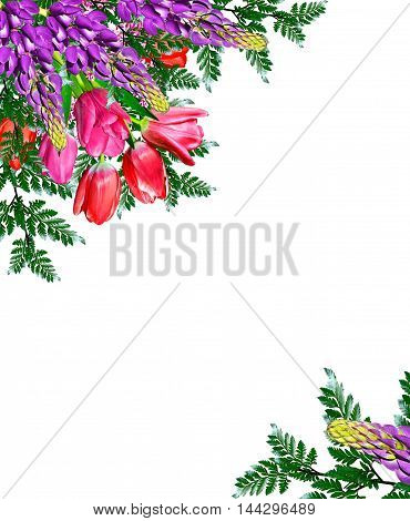 spring flowers tulips isolated on white background. lupine
