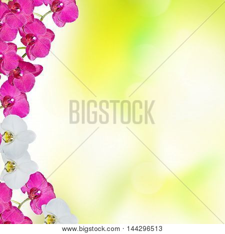 bright colorful delicate orchid flowers. floral background