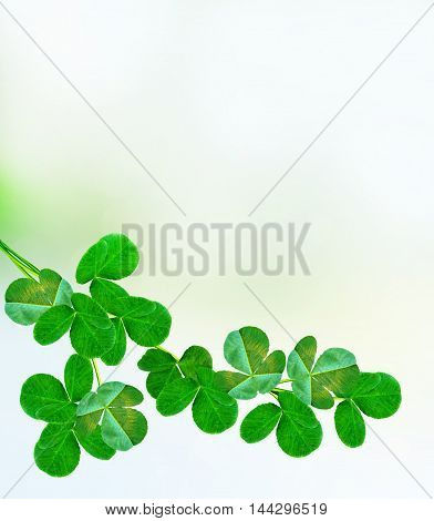 Summer landscape. Meadow. Green branch clover. background