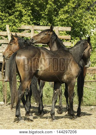 Three brown horse walking on the hay on a background of green leaves