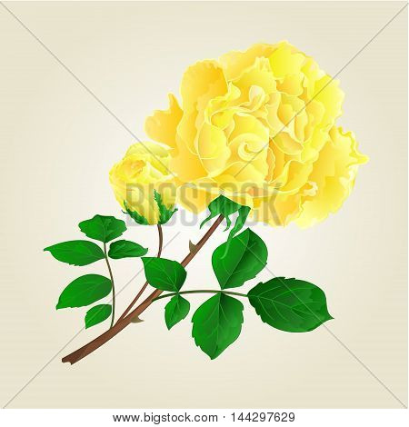 Yellow rose and rosebud stem with leaves and blossoms vintage vector illustration