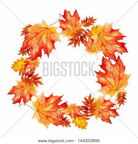 collection beautiful colorful autumn leaves isolated on white background