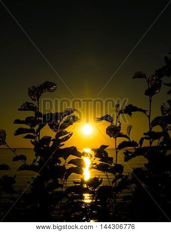 A beautiful sunset seen from behind a bush.