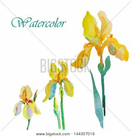 watercolor illustration Beautiful iris flower postcard hand
