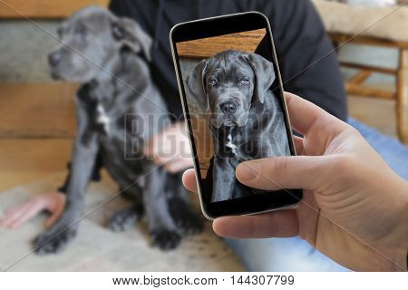 Closeup of smartphone showing cane corso dog