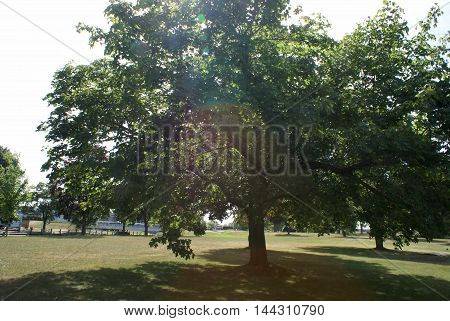 A lovely tree with some backlighting from the suns rays.