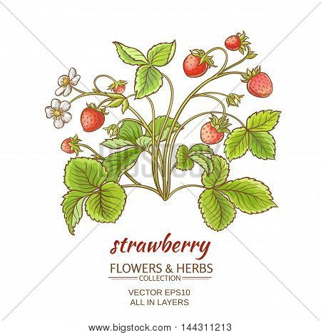 vector illustration with strawberry on white background