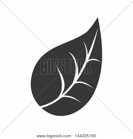 leaf plant nature garden natural botany icon. Flat and isolated design. Vector illustration