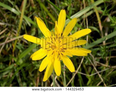 Yellow flower on meadow in wild nature