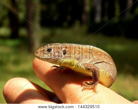 Gecko on human palm during sunny day