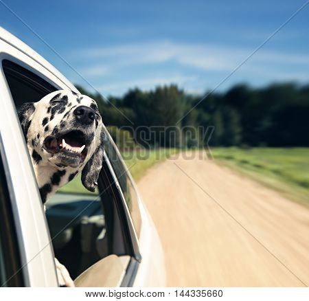 dog looks out of car window -- blurred and dog in focus