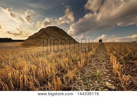 Huge pile of hay on field. Moravian landscape Pteni.