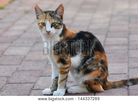 Cat sitting on street and looking at camera.