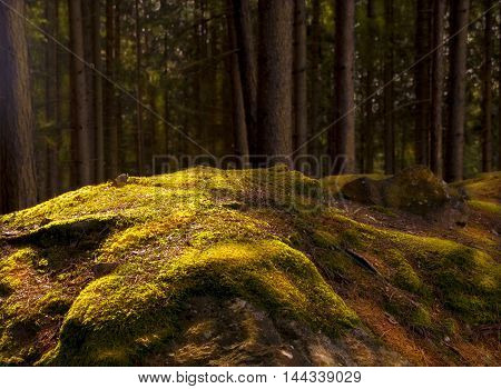 Pretty rock covered with moss. Background high tree trunks and everything is bathed in sunlight. Boskovice - Vratikov
