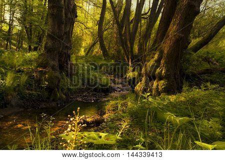 A quiet morning at the creek Valchovka bright sunbeams