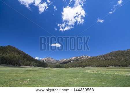 Wide angle scenic landscape of green meadow surrounded by pine forests under bright blue sky in California Sierra Mountains