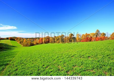 Autumn color trees along farmland fence line