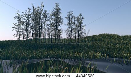 3d illustration of the bamboo grove