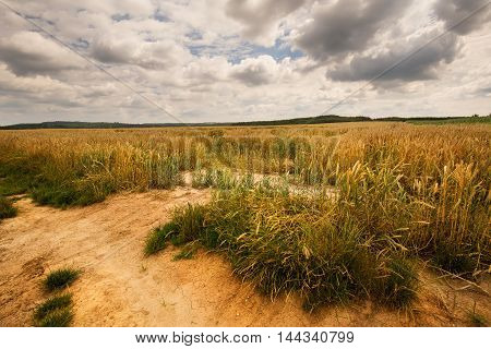 Ripening grain fields and dense clouds. Moravian landscape Boskovice.