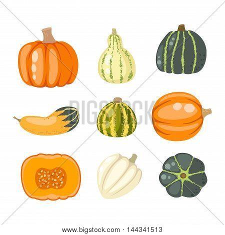 Autumn collection of pumpkin set elements design with different pumpkins