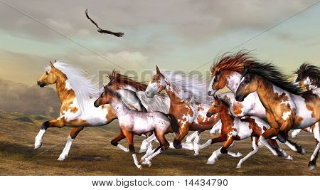 Wildhorses herd