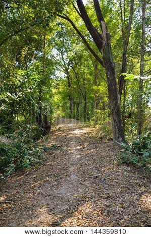 close up walkway nature in Nakhon nayok , Thailand