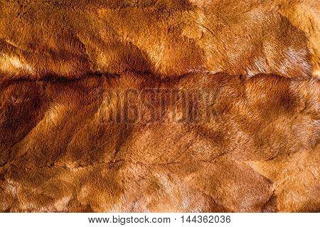 Texture, Background. Mink Brown
